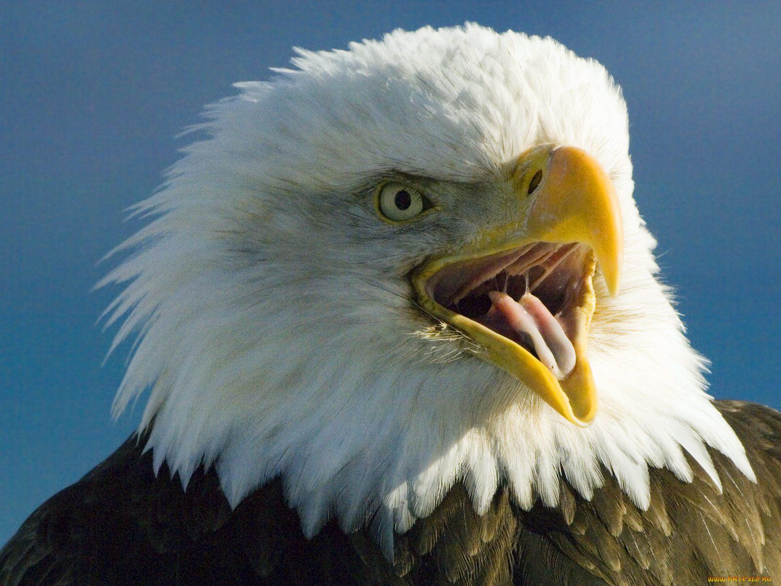 фото приколы про орлов картинки модератор добовляйте